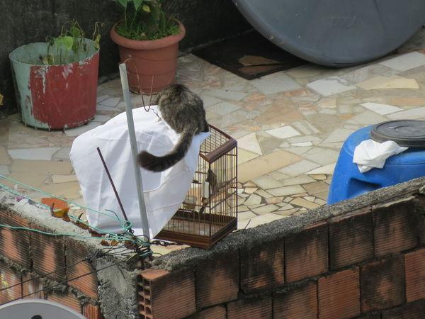 Bird Cage Brazil Cat Cat On Bird Cage Favela Favelabrazil Life Through A Lens Rio Rio De Janeiro Street Photography Travel The World