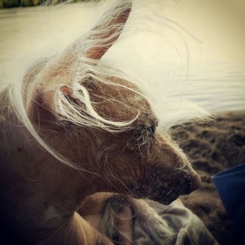 Close-up Dog Pets Pet Portraits