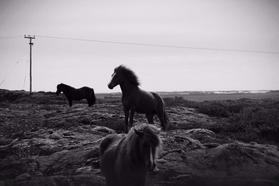 Beautiful stock photos of horse, Animals In The Wild, Auto Post Production Filter, Day, Full Length