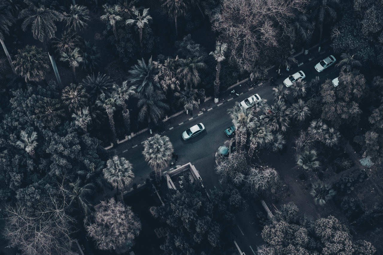 Aerial View Beauty In Nature Cars Check This Out Day Exceptional Photographs Eye4photography  EyeEm Best Shots First Eyeem Photo Flying High Garden Growth High Angle View In A Row Nature No People Outdoors Overview Popular Photos Queue Street Text Tree