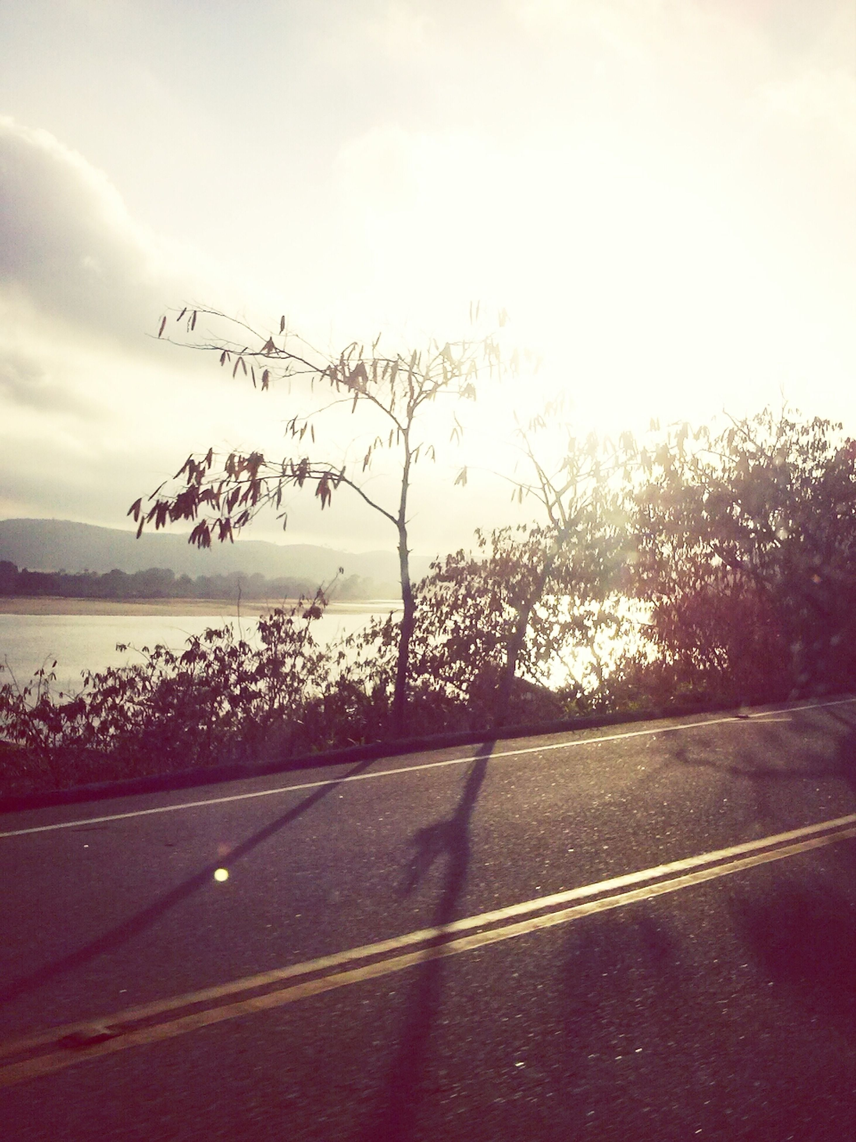 road, transportation, sky, the way forward, tree, road marking, tranquil scene, tranquility, beauty in nature, nature, scenics, water, sunset, street, country road, silhouette, cloud - sky, no people, outdoors, asphalt