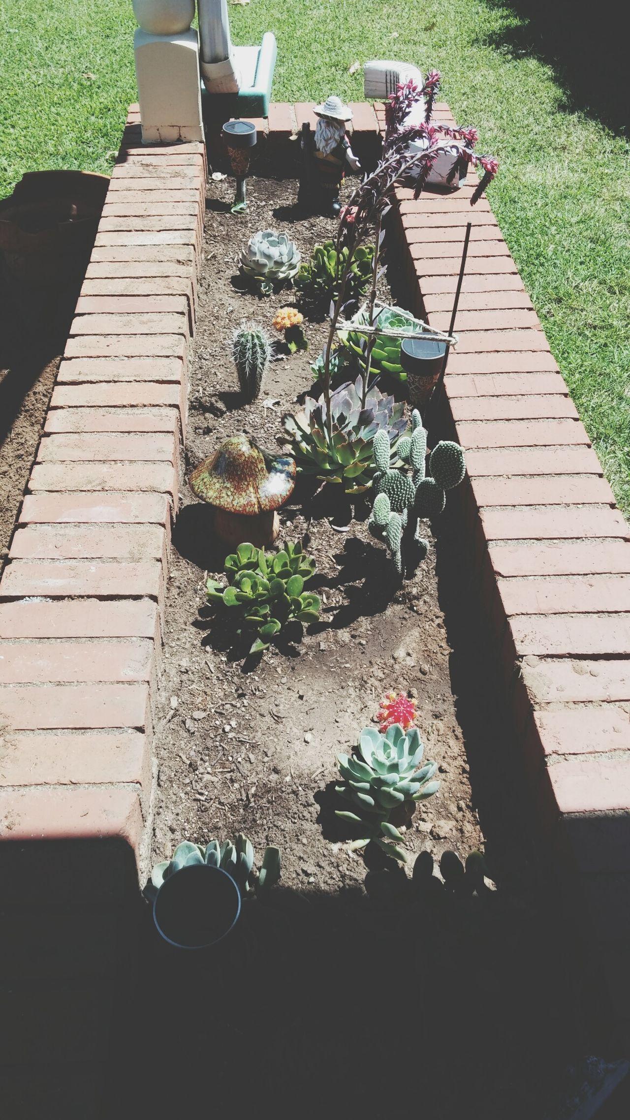 I Love Cactus Cactus Garden My Cactus Garden