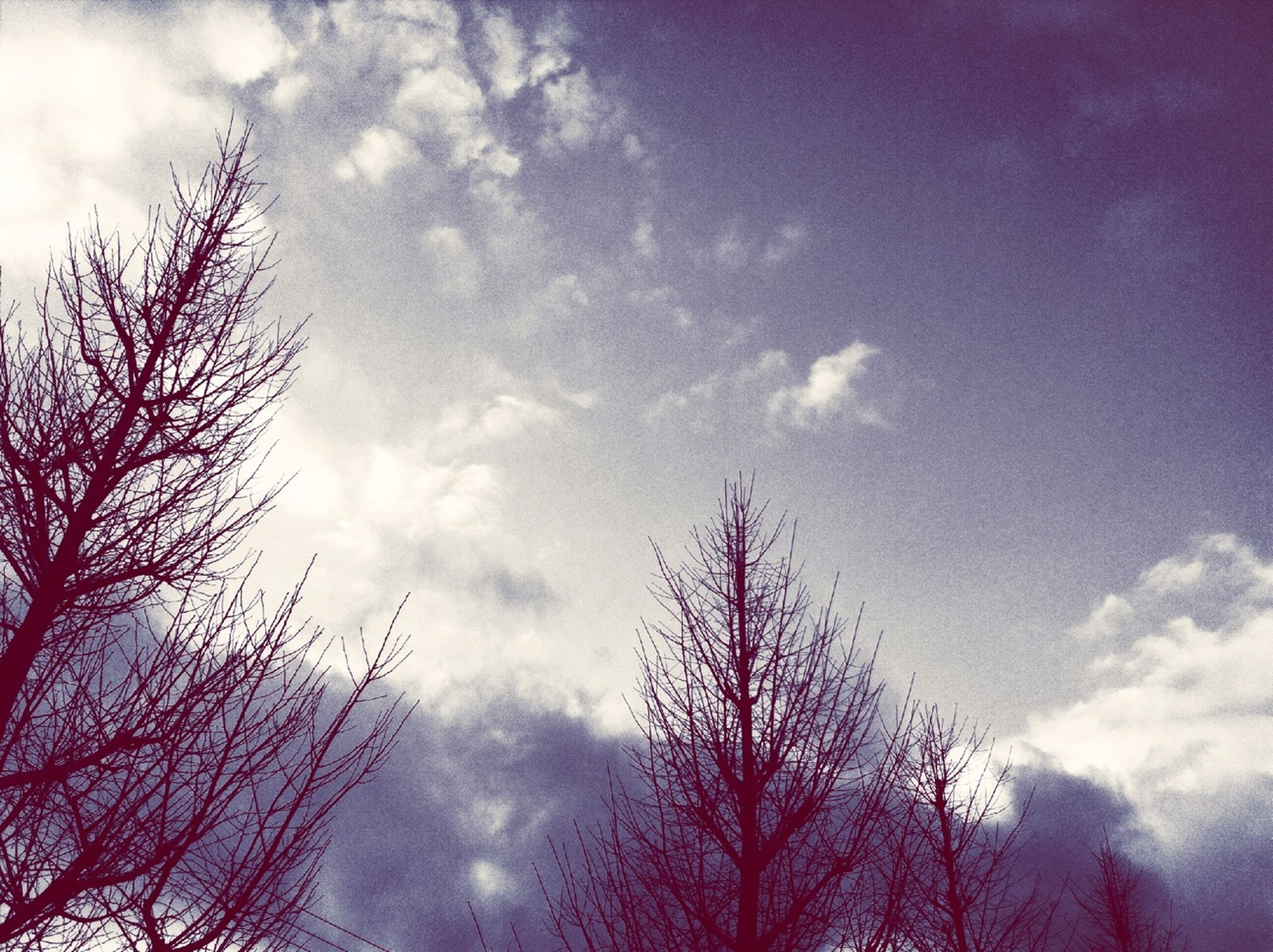 low angle view, tree, sky, bare tree, cloud - sky, silhouette, branch, beauty in nature, tranquility, nature, cloudy, scenics, cloud, tranquil scene, treetop, high section, outdoors, growth, blue, no people