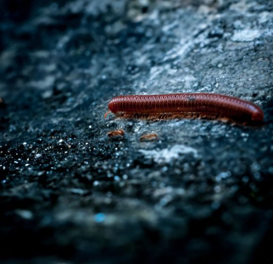It's worm in here.. ? Check This Out Taking Photos Macro