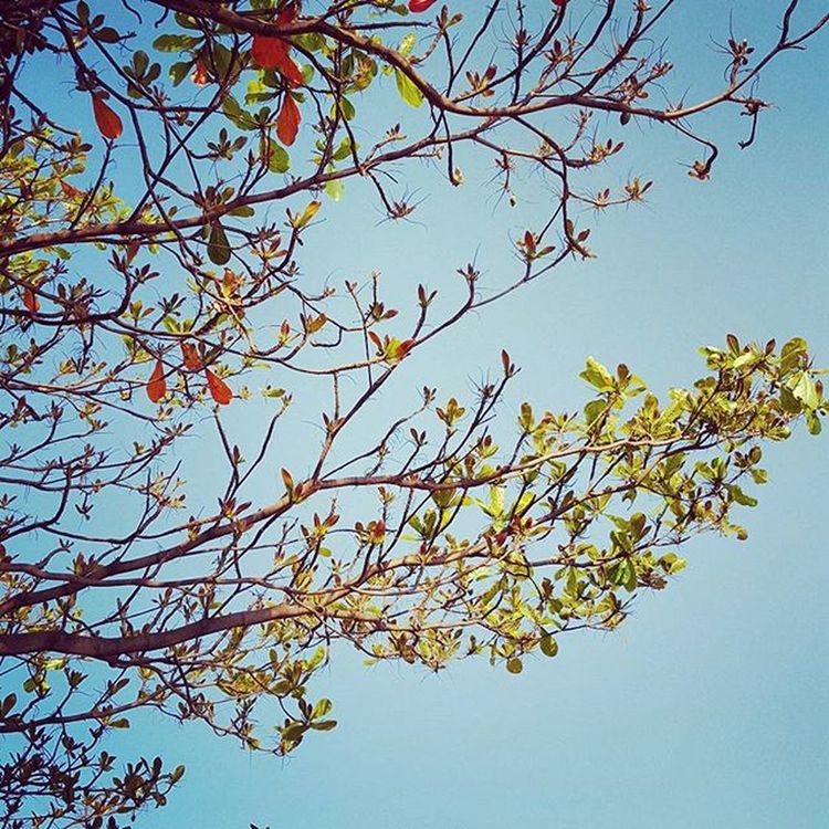 I know I am but summer to your heart, and not the full four seasons of the year... 🌳🍂🍁🍃 Summer Love Happy Me Beautiful Sky Relax Blue Spring Enterpernuer Explore Photographerlife
