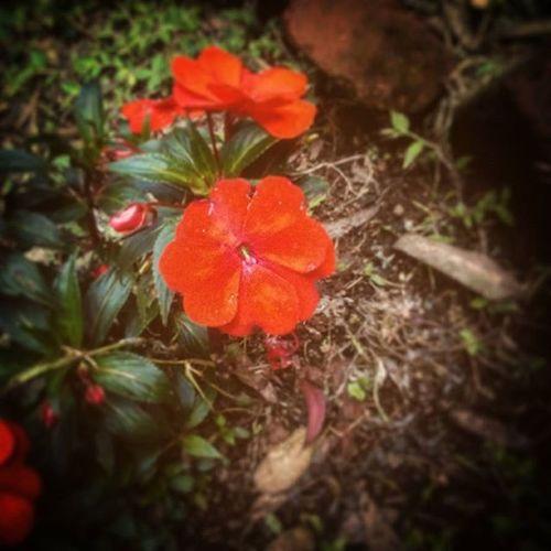 Nature Flowers Red Green B_E_A_utifu Outdoor_day Guatemala Love_Gods_creations
