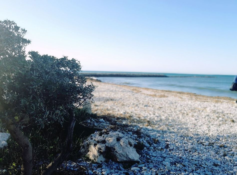 Sea Horizon Over Water Beach Nature Water Scenics Sky Beauty In Nature Plant Growth No People Tranquility Outdoors Wave Close-up Day Denia Spain♥