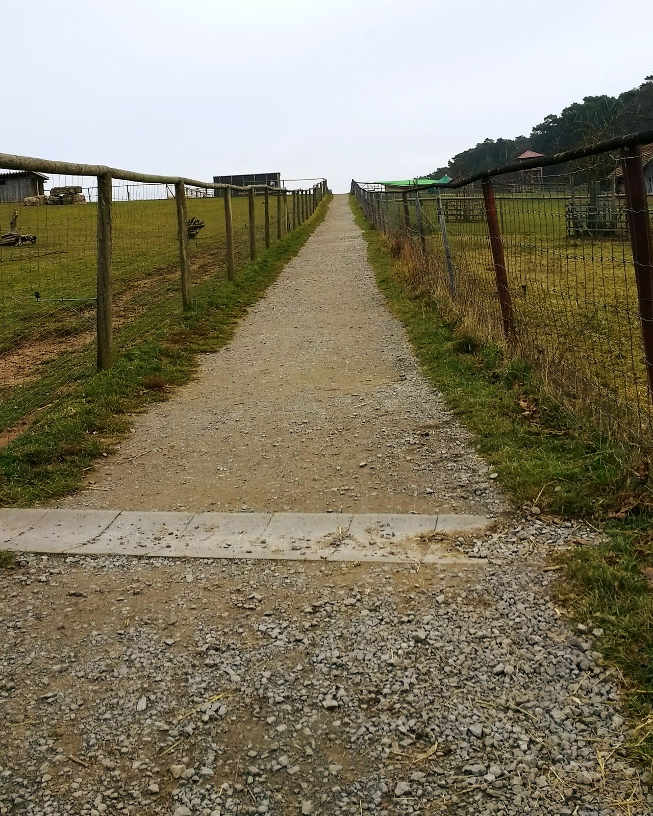 Food path Paths Way Walking Growth Nature Agriculture Day No People Outdoors Beauty In Nature