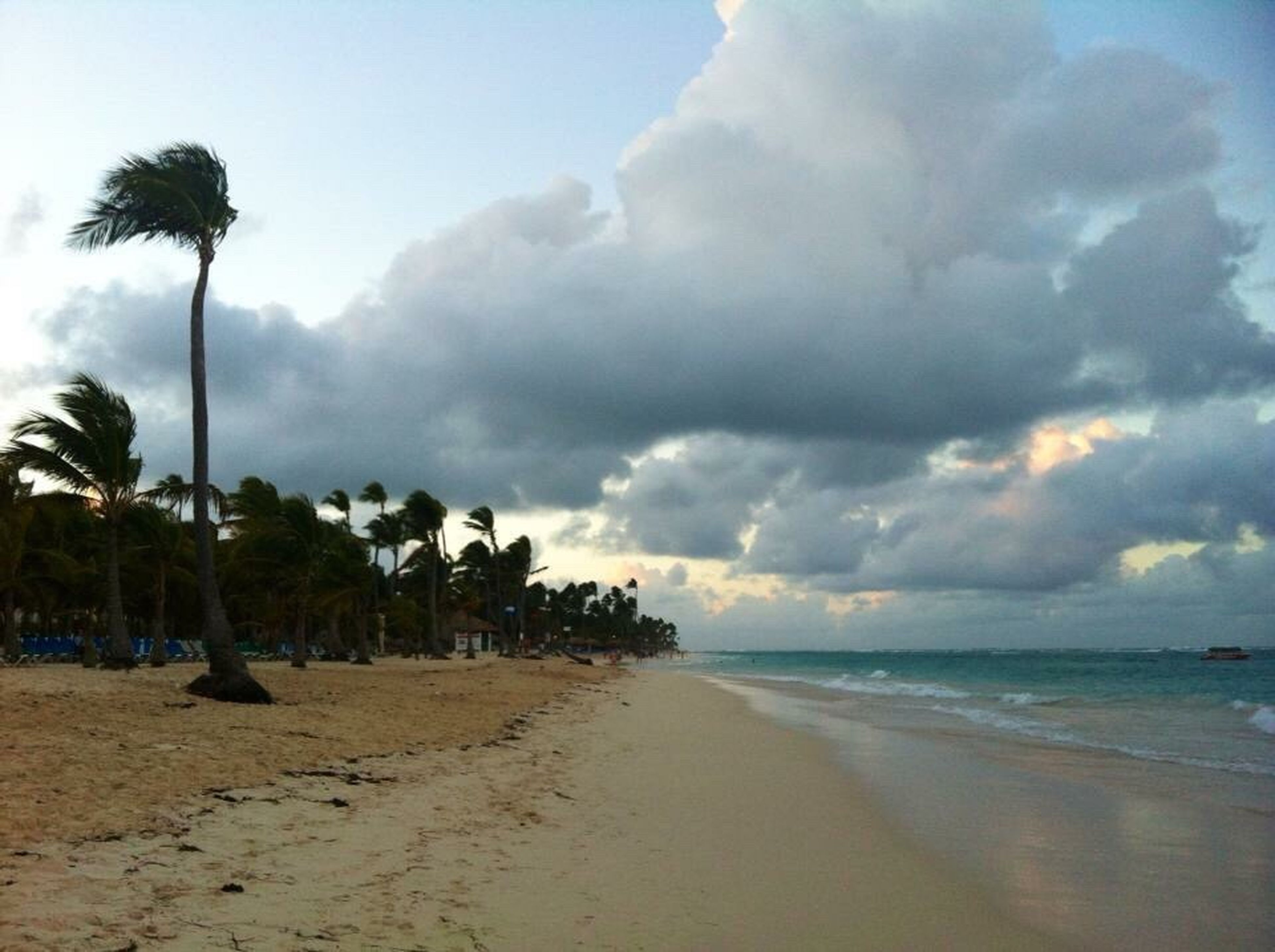 beach, sea, palm tree, sky, horizon over water, sand, shore, water, tranquil scene, tranquility, tree, scenics, beauty in nature, cloud - sky, nature, cloud, cloudy, coastline, idyllic, vacations