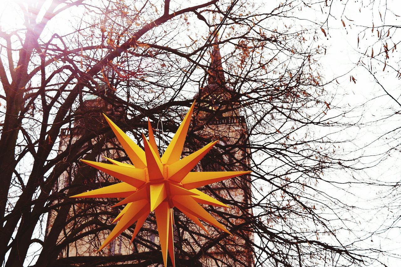 Tree Yellow Low Angle View Nature Beauty In Nature December 2016 Autumn 2016 Showcase December The Places ı've Been Today Christmas Around The World Christmas Decorations Christmas Stars Magdeburg Christmas Market Church Tree_collection.
