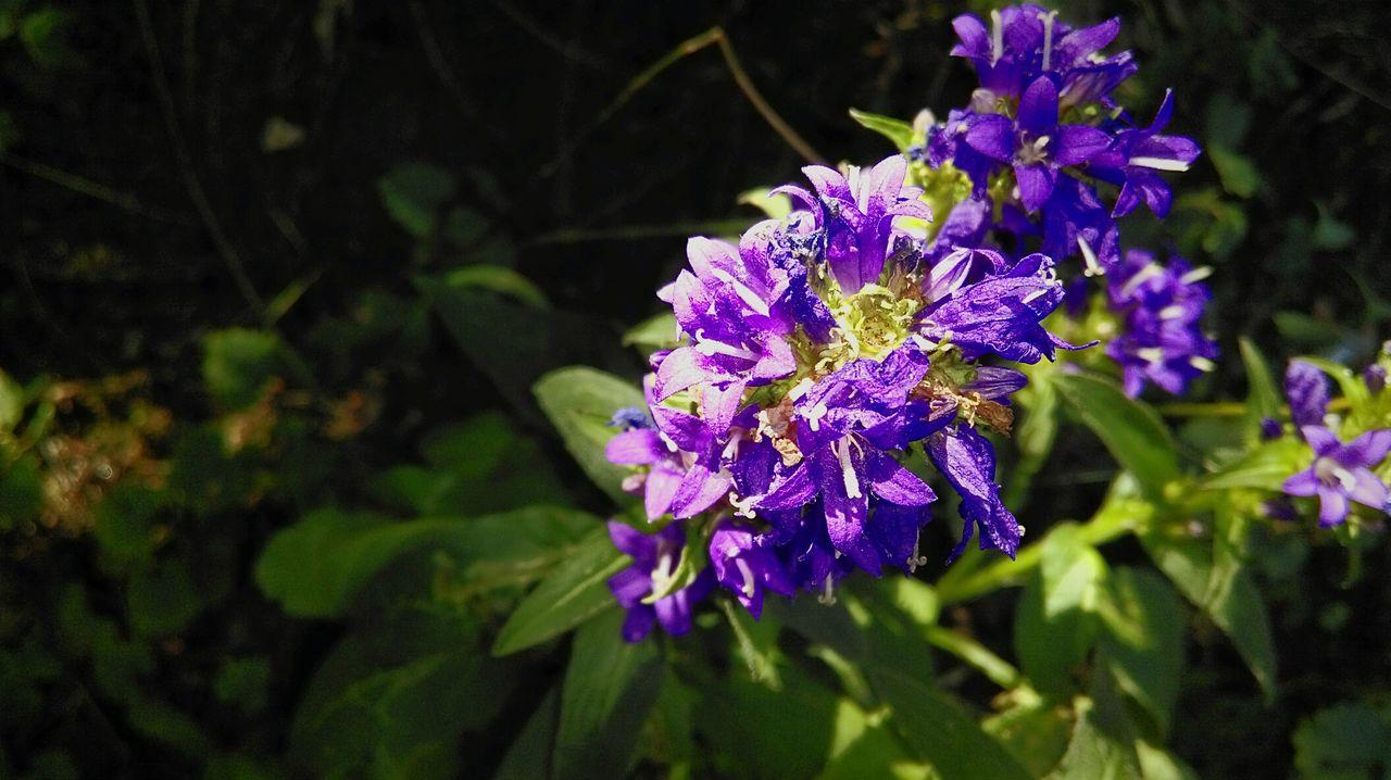 Kwiat Kwiatki Kwiaty Kwiatów Kwiatuszki Kwiatuszek Piekne Google Best  First Eyeem Photo