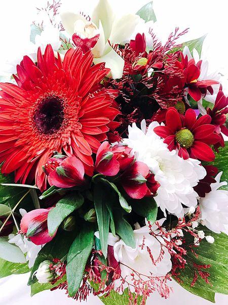 Flower Petal Nature Beauty In Nature Fragility Freshness Flower Head
