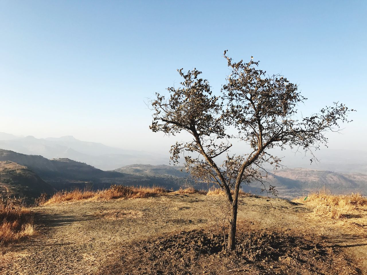 landscape, tree, nature, tranquility, tranquil scene, beauty in nature, scenics, mountain, outdoors, day, clear sky, no people, sunlight, lone, arid climate, sky