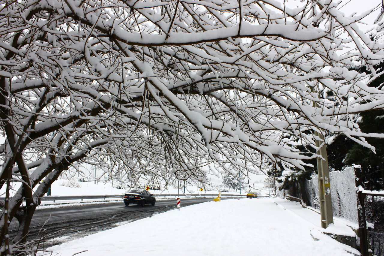 Beauty In Nature Branch Cold Temperature Day Extreme Weather Frozen Nature No People Outdoors Snow Snowing Tree Weather White Color Winter