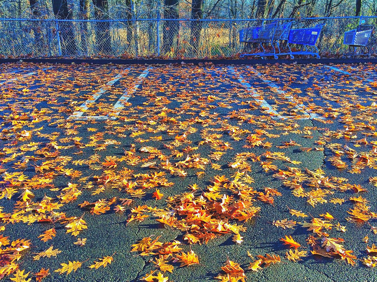 Leaves... Leaf Autumn Nature Outdoors Sunlight No People Field Change Day Beauty In Nature Tranquility Close-up Foliage December Carpark Car Park