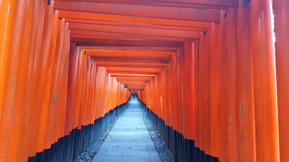 Orange Color Architecture Tourism Built Structure The Way Forward Travel Travel Destinations Day No People Outdoors Kyoto Japan Kyoto,japan Kyoto City Shrine Sacred Places Temple Shrine Of Japan Fushimi Inari Shrine Shrines & Temples Fushimi Inari Taisha Fushimi Inari Kyoto Fushimi Ko Kyoto Architectural Column Cultures Travel Art Is Everywhere
