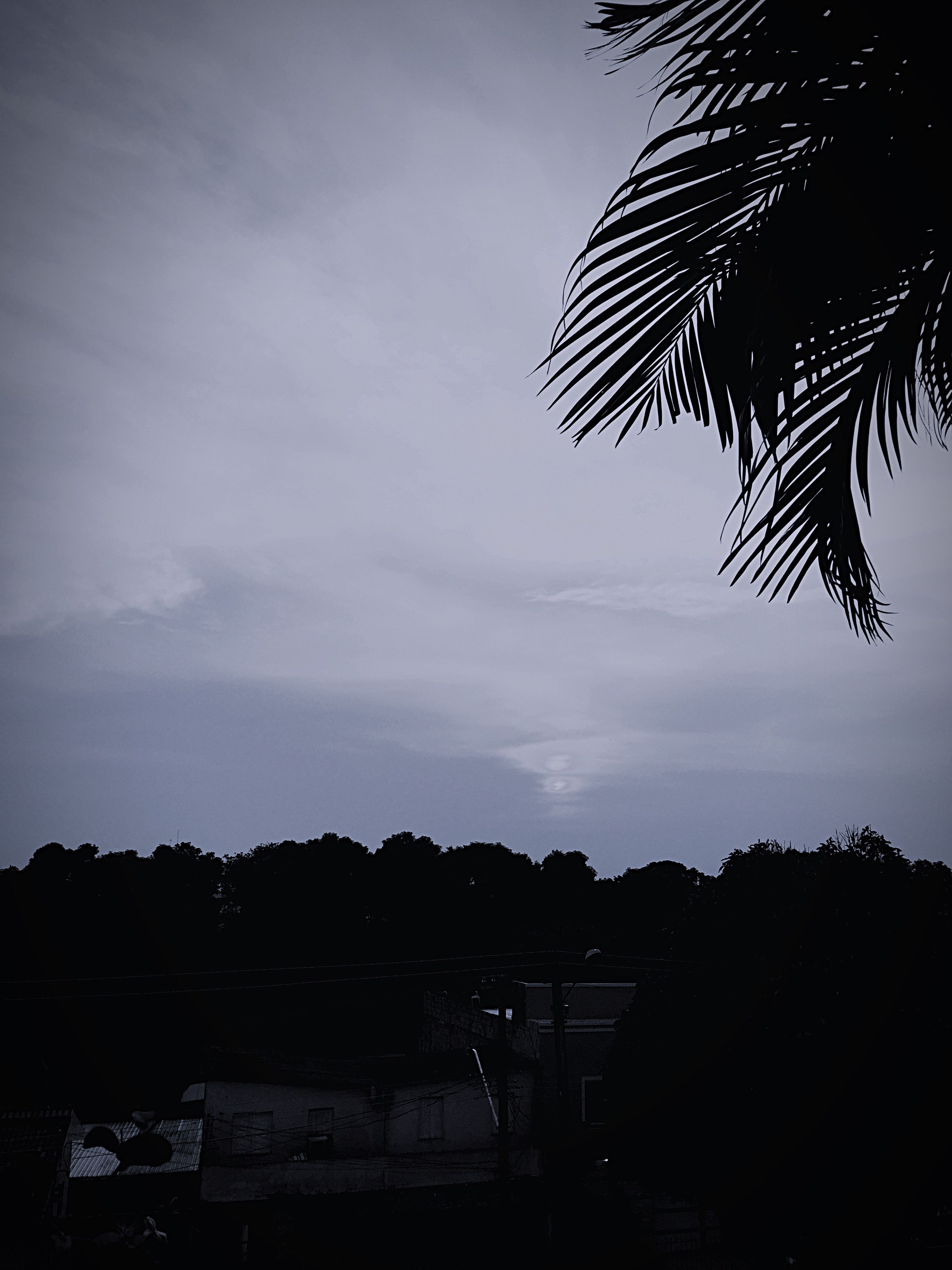 sky, tree, silhouette, tranquility, palm tree, growth, nature, low angle view, tranquil scene, cloud - sky, beauty in nature, scenics, cloud, outdoors, no people, sunset, dusk, cloudy, branch, landscape