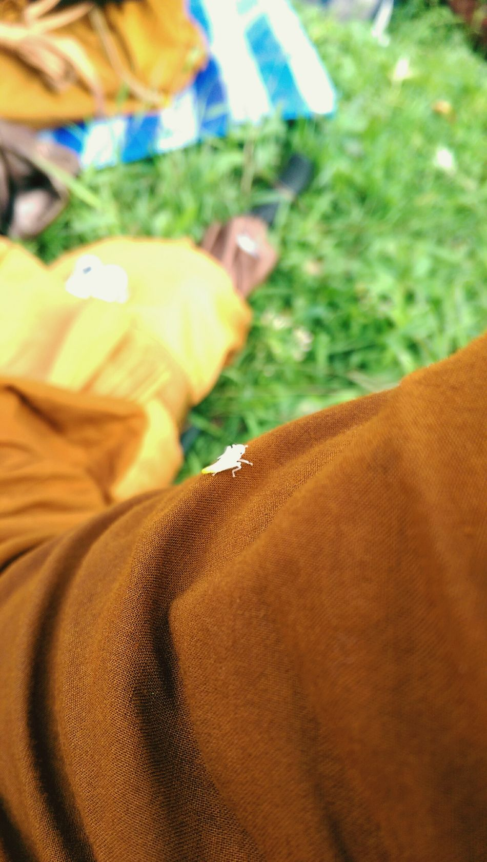 yellow robe เพื่อนร่วมทาง