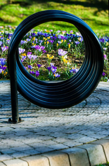 Bike Stand Close-up Coil Spring Crocus Crocus Flavus #wildflowers #guadarrama #primavera #spring #flores #nature #mountain Crocuses Spring Cycle Rack Day Flower Fragility Jastrzębie - Zdrój No People Outdoors P Plant Spring Springtime Whell