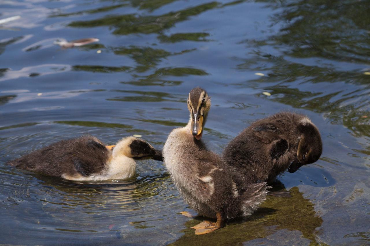 Beautiful stock photos of lustige tiere,  Animal Themes,  Animal Wildlife,  Bird,  Day