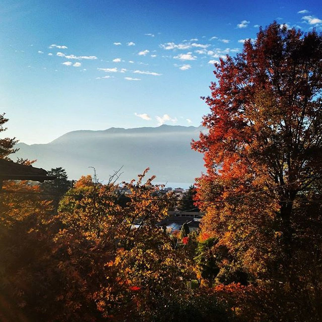 Autumn colors on Lake Maggiore Luino Lago Maggiore Italy Autumn Fall Colors