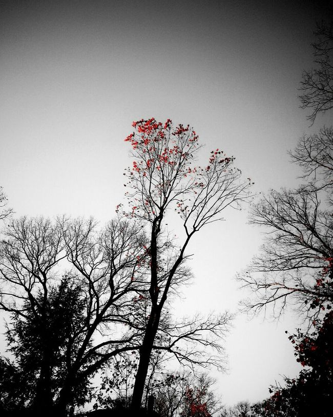 Blackandwhite Red Nature_collection