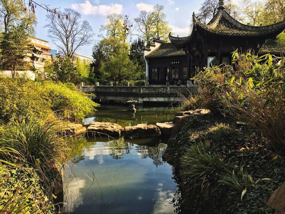 Water Architecture Tree Built Structure Reflection Building Exterior Day Outdoors Nature No People Place Of Worship Sky Zen Garden Chinese Culture Park Spring