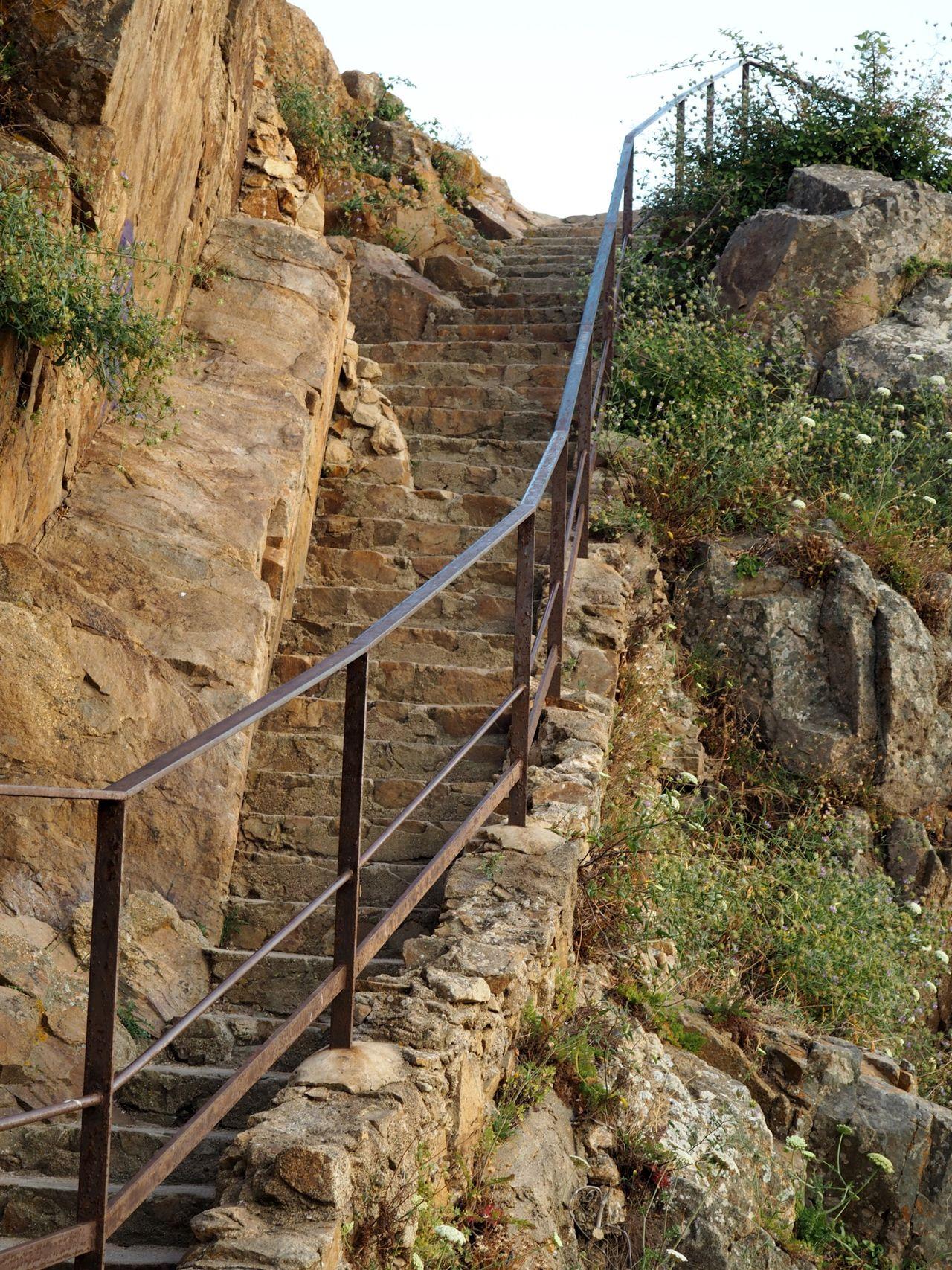 Plants Ladder Stears Stones Old Banister