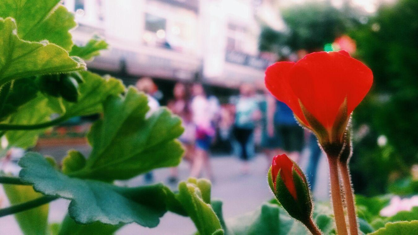 Flowers Street VSCO Vscocam