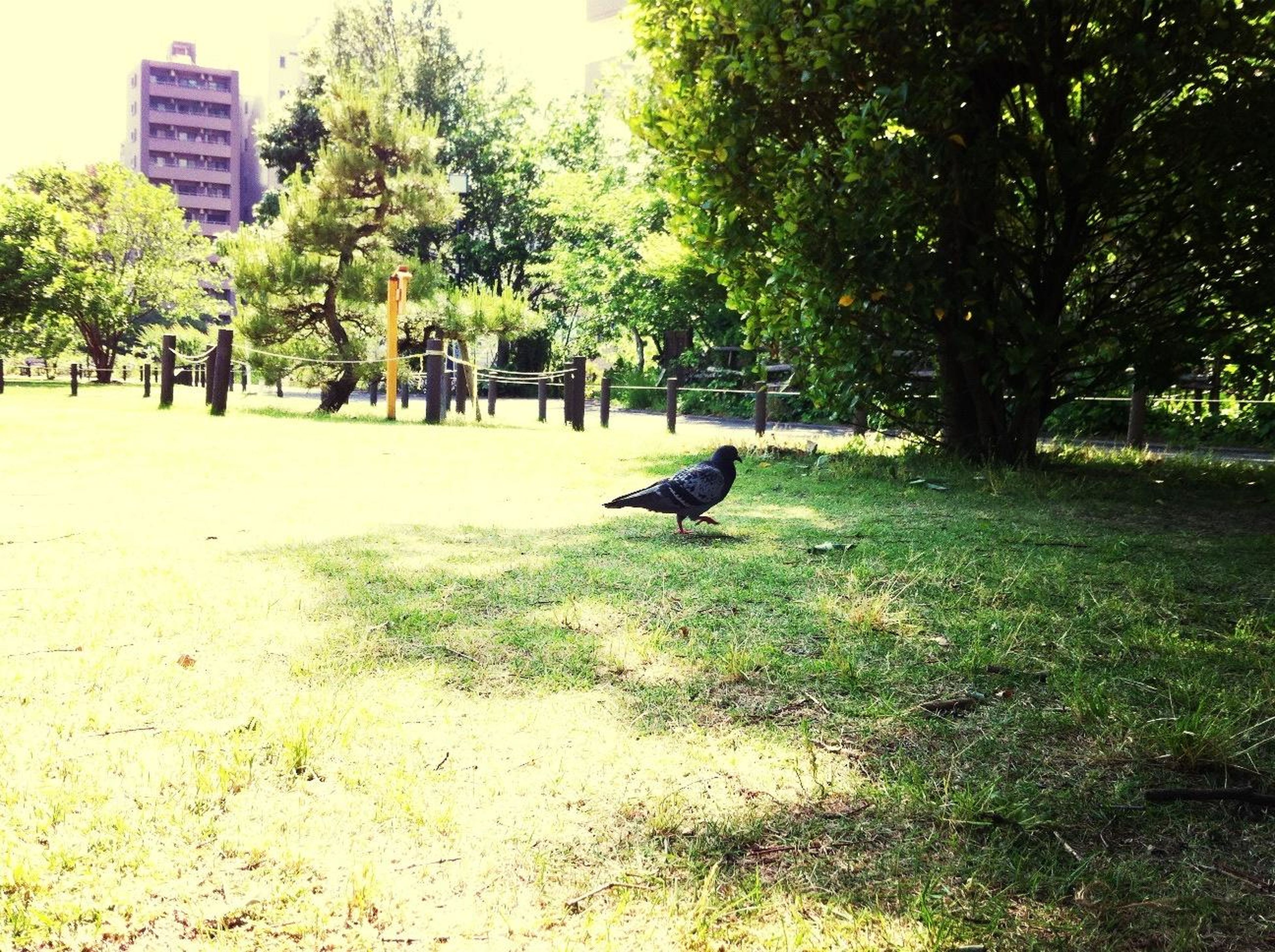 animal themes, tree, one animal, animals in the wild, wildlife, mammal, domestic animals, bird, grass, park - man made space, building exterior, pets, green color, nature, growth, sunlight, built structure, architecture, day, field