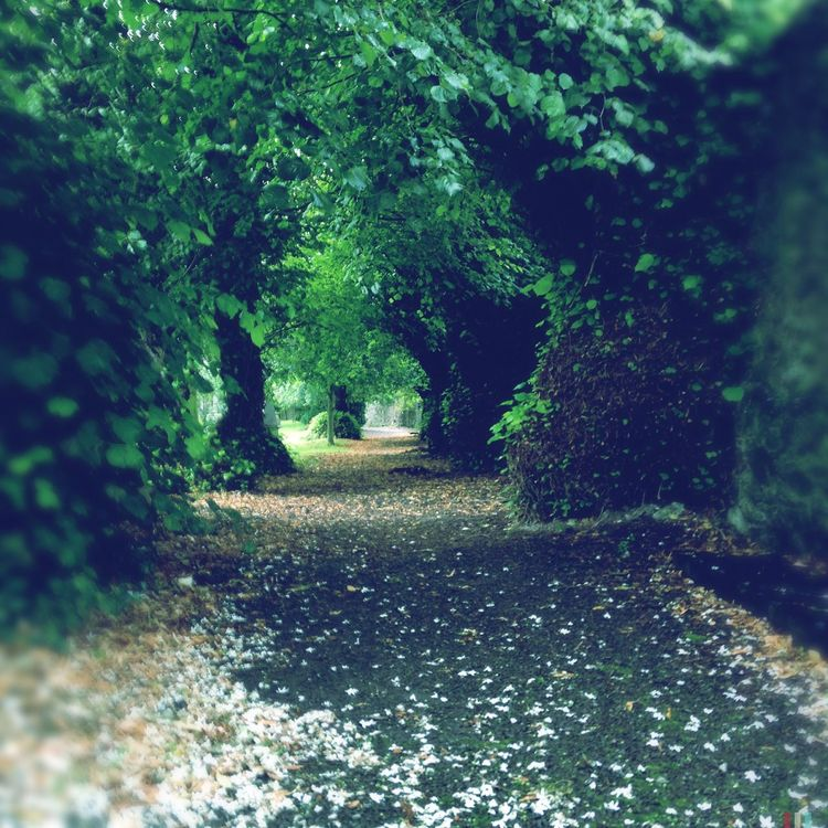 Path Cork Ireland Pathway Hipstamatic IPhoneography