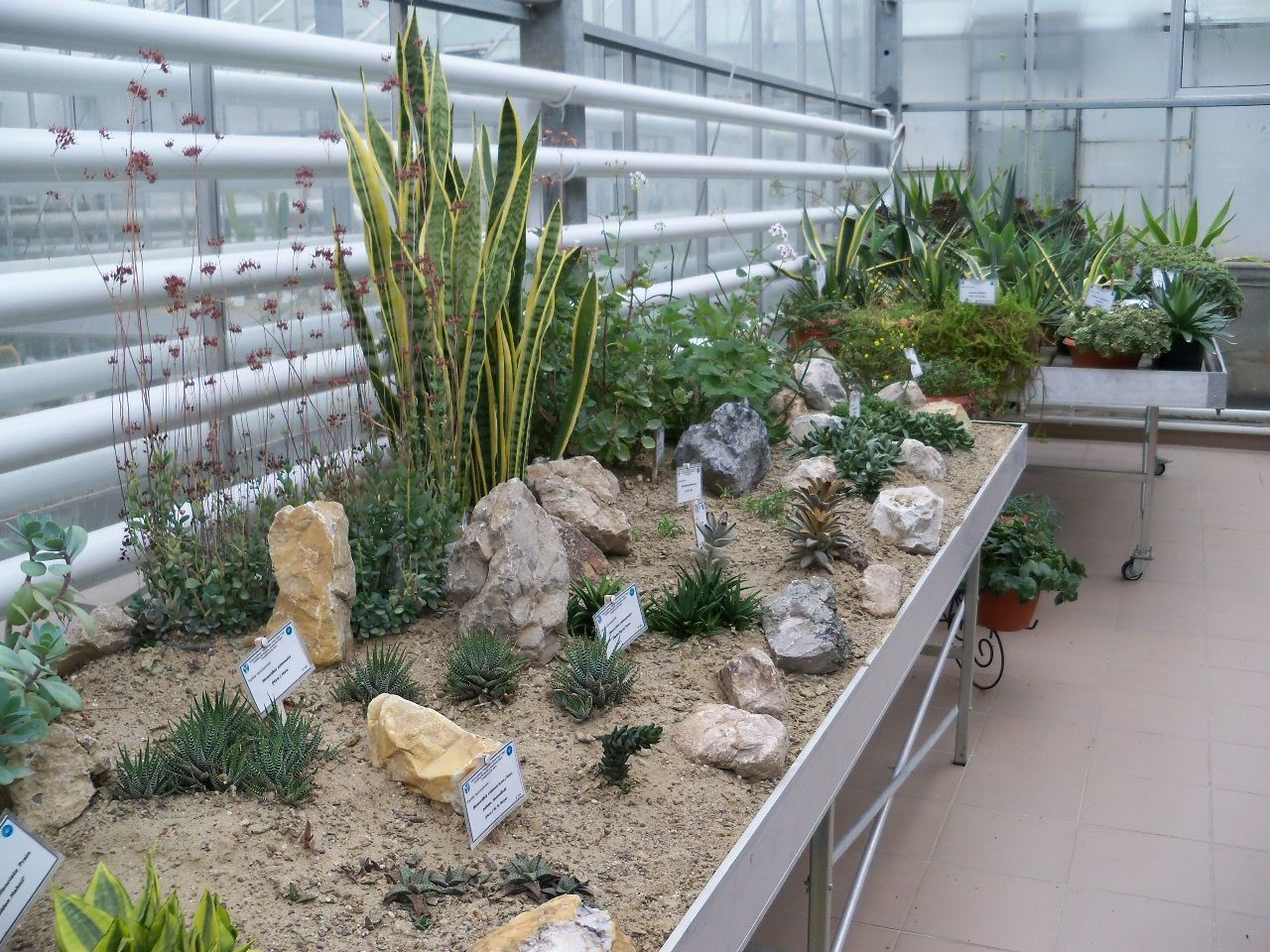 plant, growth, potted plant, greenhouse, nature, no people, day, high angle view, plant nursery, outdoors, green color, architecture, freshness