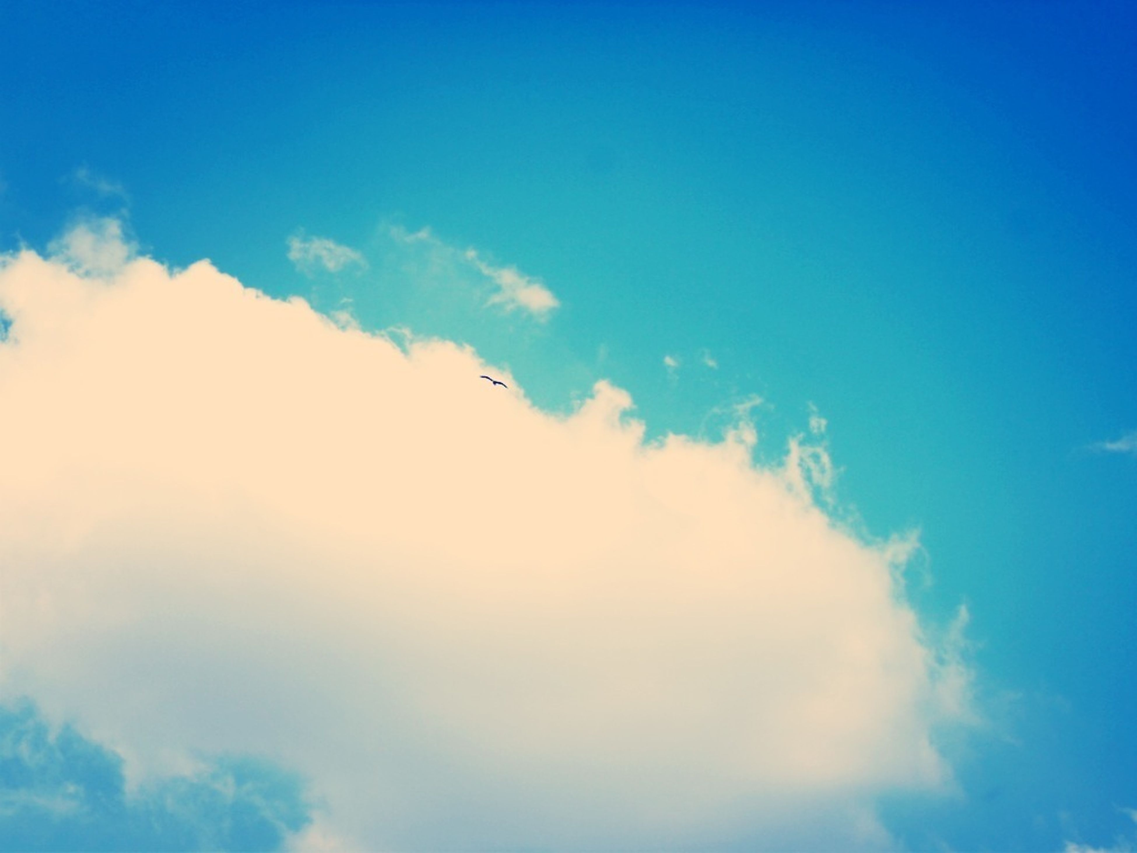 low angle view, blue, sky, flying, cloud - sky, beauty in nature, nature, tranquility, scenics, mid-air, cloud, tranquil scene, outdoors, animal themes, day, no people, bird, sky only, copy space, idyllic