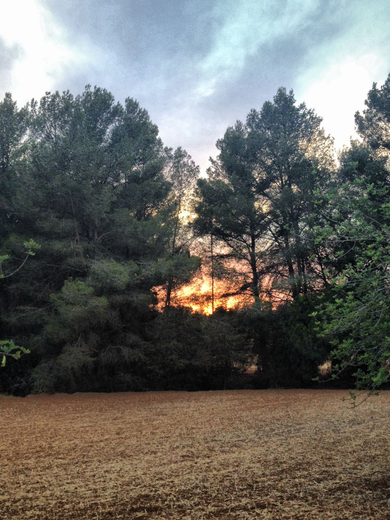 Ibiza Sun Light Through Trees Sunset Photography Pine Trees Silence In Nature