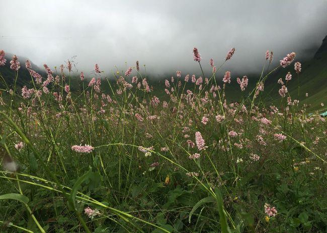 A walk among clouds 😍🇨🇭💕 Taking Photos Enjoying Life EyeEm Best Shots Tadaa Community EyeEm Nature Lover Flowers Schweiz Schweizer Alpen