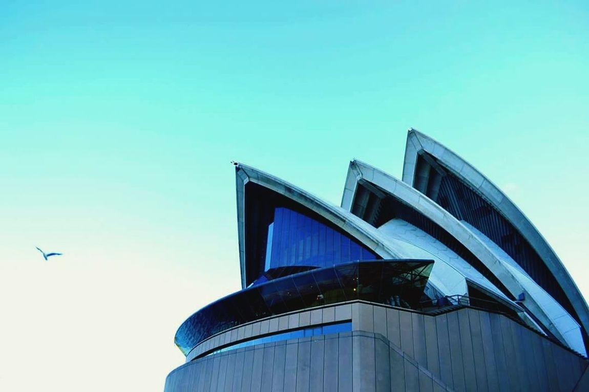Sydney Opera House Sydney Australia Picturesque Iconic Urban Urbanphotography Eyeem Sydney Pictue Perfect Mobilephoto Travel Photography Mobilephotography Blue Sky Blue Bird In Flight