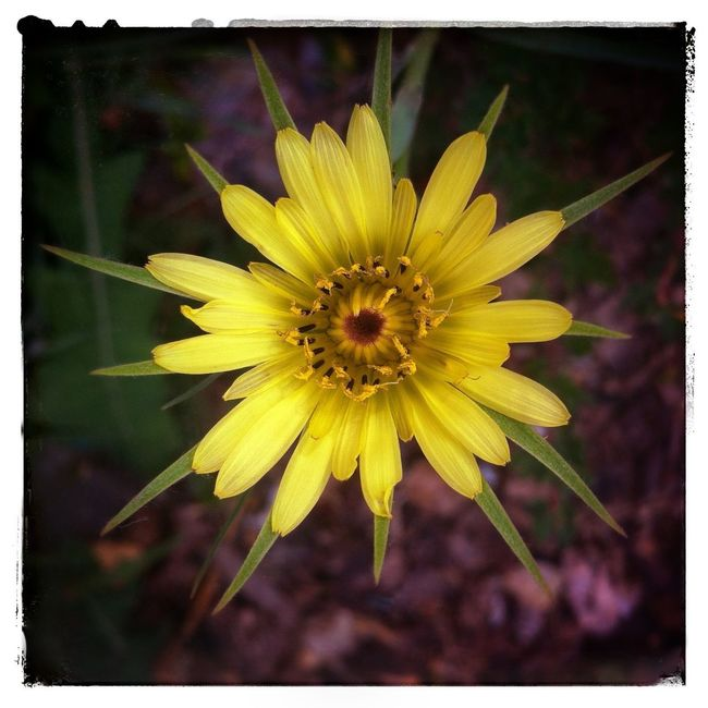 Flower burst. Flowers Photography IPhoneography YYC