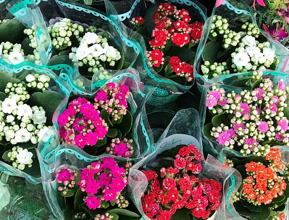 Flower Variation Multi Colored Retail  For Sale Choice Fragility Consumerism High Angle View Day Store Bouquet Nature Business Arrangement Flower Shop Flower Market Backgrounds No People Market Kalanchoe Multicolored