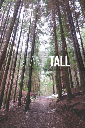 Stand Tall. Hello World Stand Tall Graphic Design Student College Nature Tree Glencoe