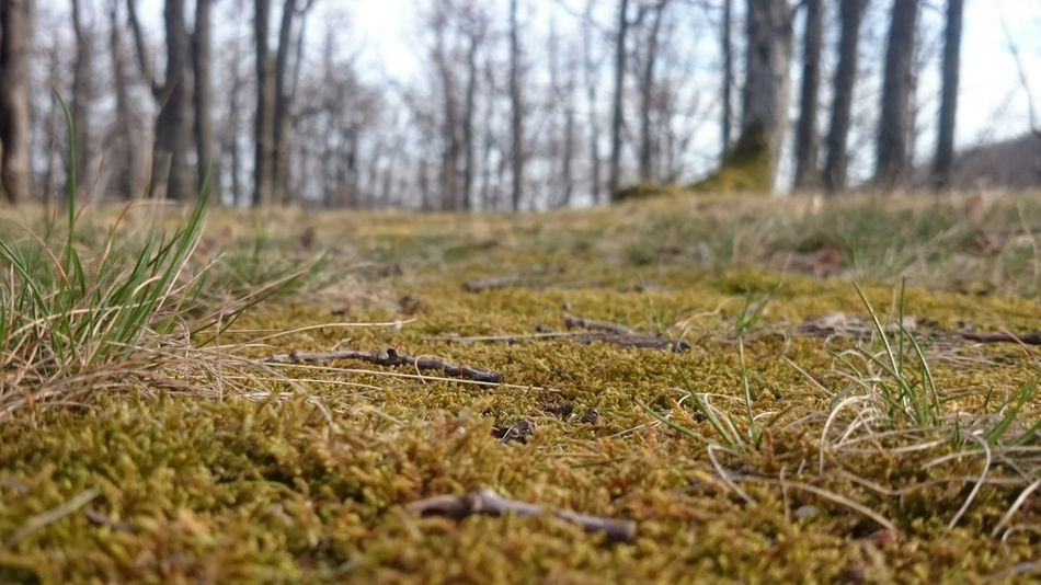 Nature Grass Tranquility No People Outdoors Day Beauty In Nature Forest Tree Moss Hungary Bükk
