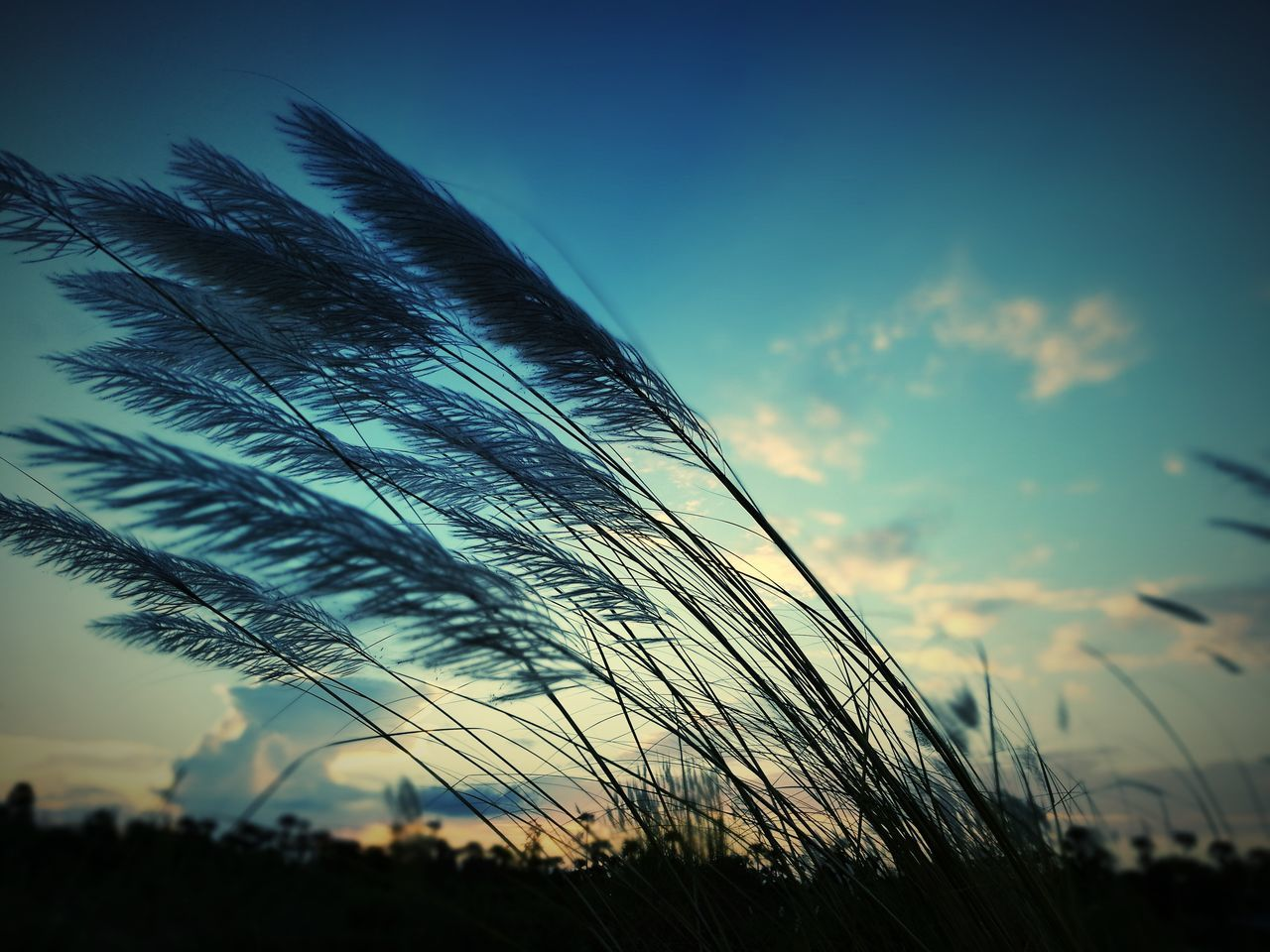 nature, sky, beauty in nature, no people, low angle view, growth, sunset, outdoors, close-up, silhouette, cloud - sky, tranquility, day, fragility