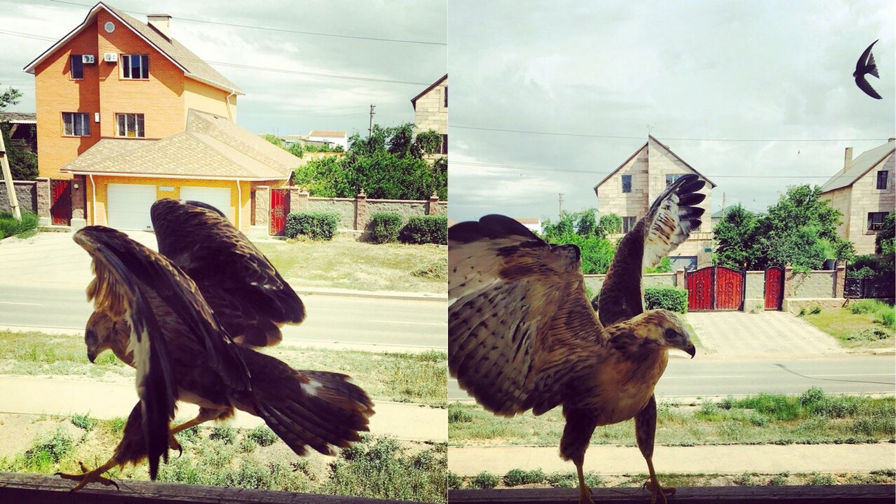 Hello World Taking Photos Smartphone Photography Kazakhstan Hello World Pic First Eyeem Photo Eyem Gallery Photography Taking Photos Picture EyeEm Photo Lake Balkhash College Life Kz Eagle #little Eagle