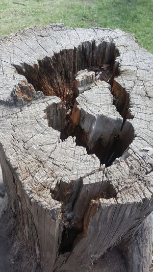 laberinto Laberinto Nature Conected With Nature Nature_collection Nature Photography Tree Dead Tree Laberint Tronco