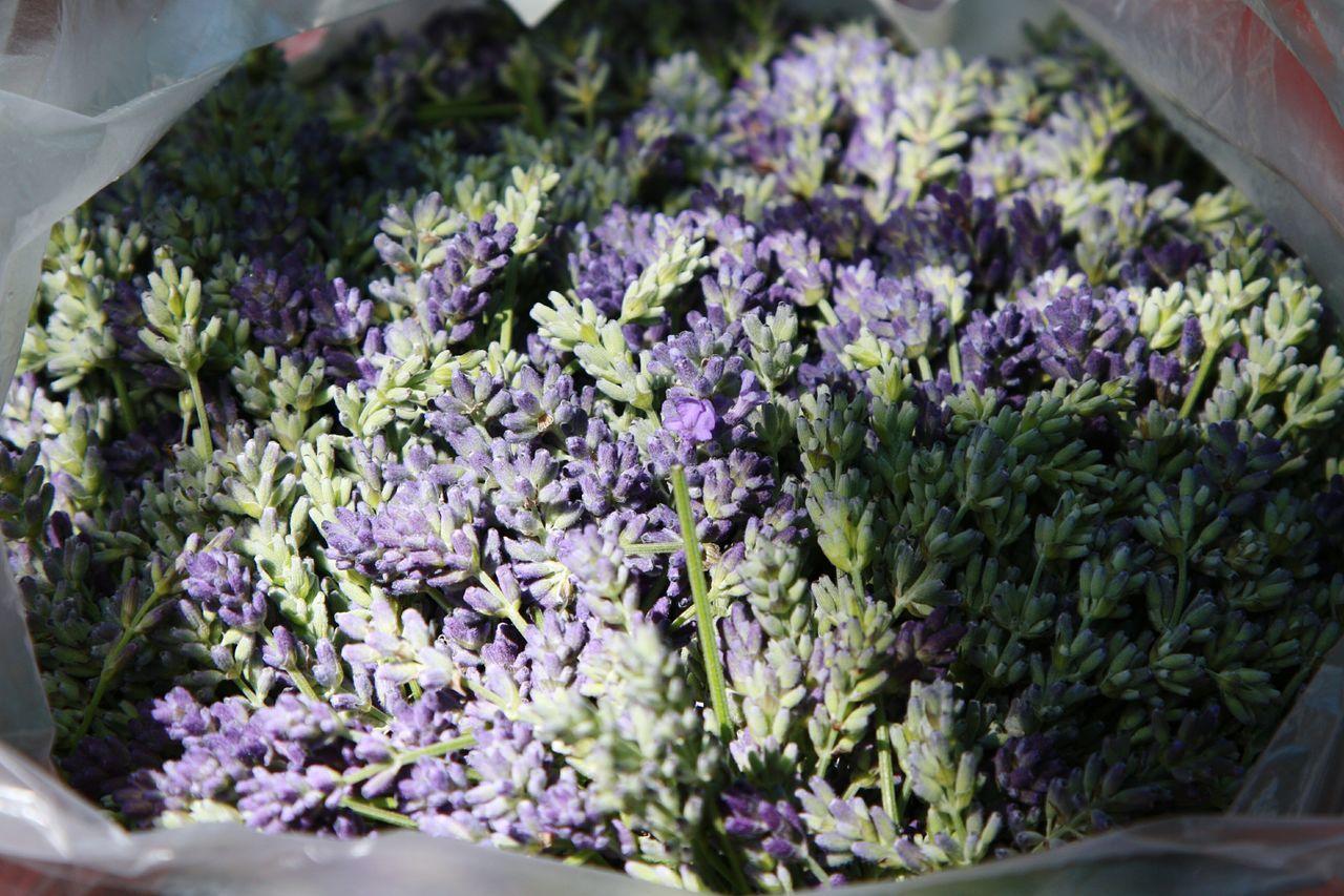 Lavender Flowers Aroma Harvest Catch лаванда цветы аромат урожай улов цветки лаванды цветки