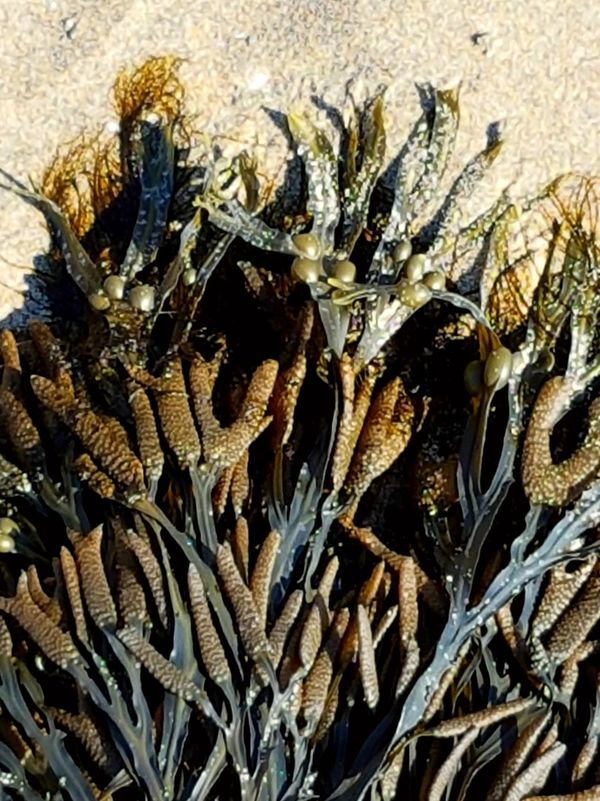 Backgrounds No People Nature Close-up Day Outdoors Seaweed Sand Patterns Of Nature Texture
