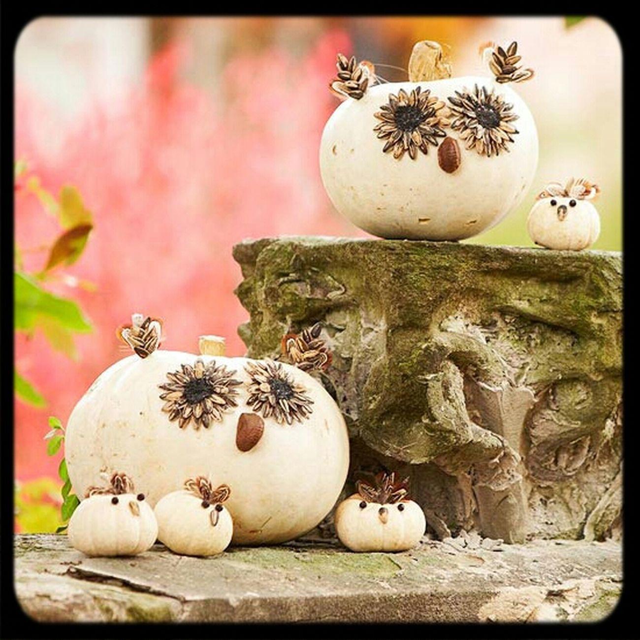 Lovely Pumpkins