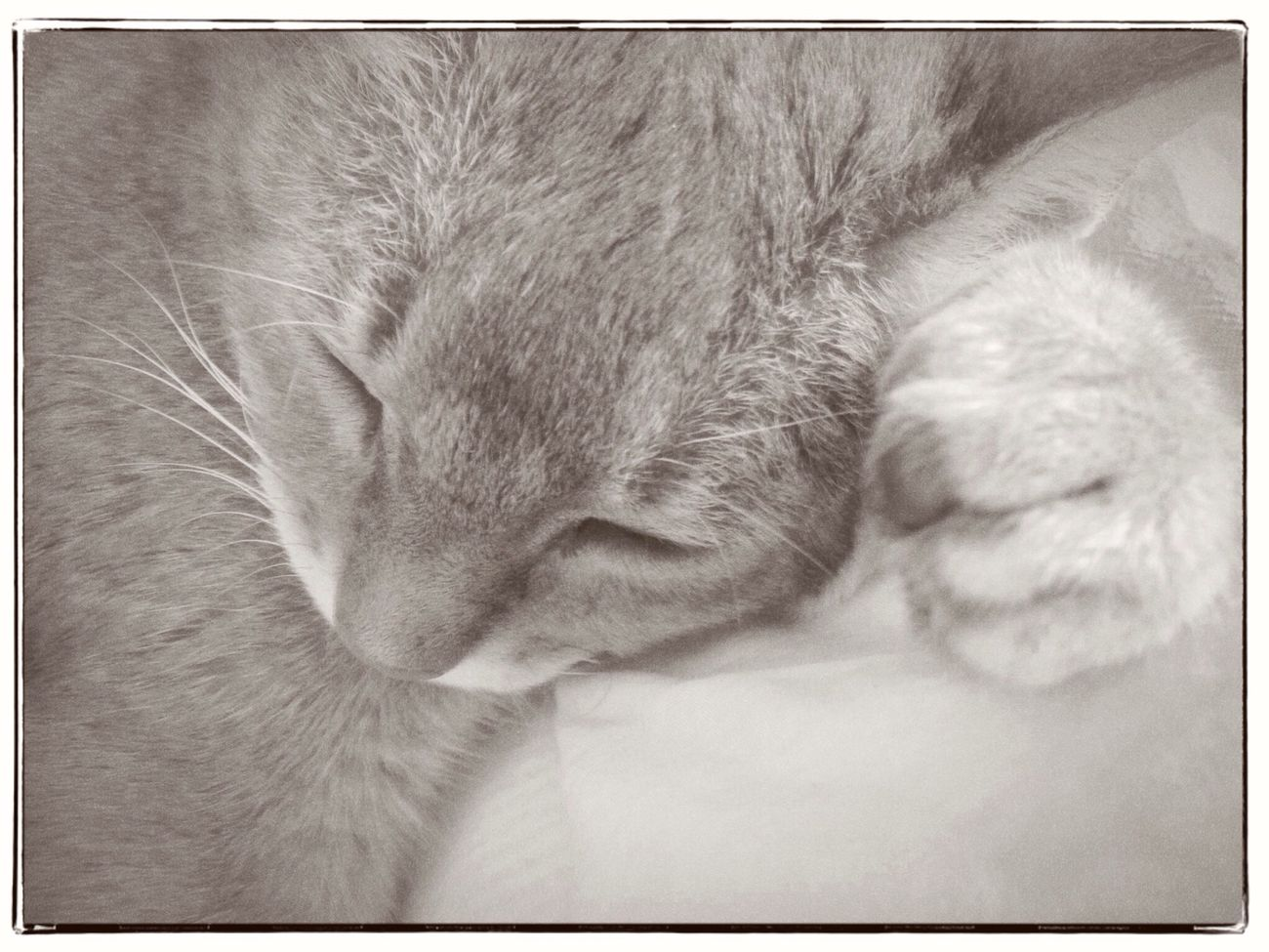 snooze on my paw Cats Of EyeEm Sleeping