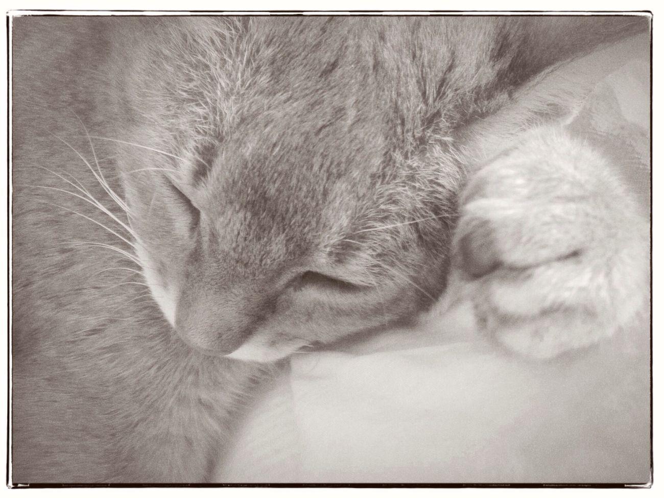 snooze on my paw Cats Of EyeEm Sleeping