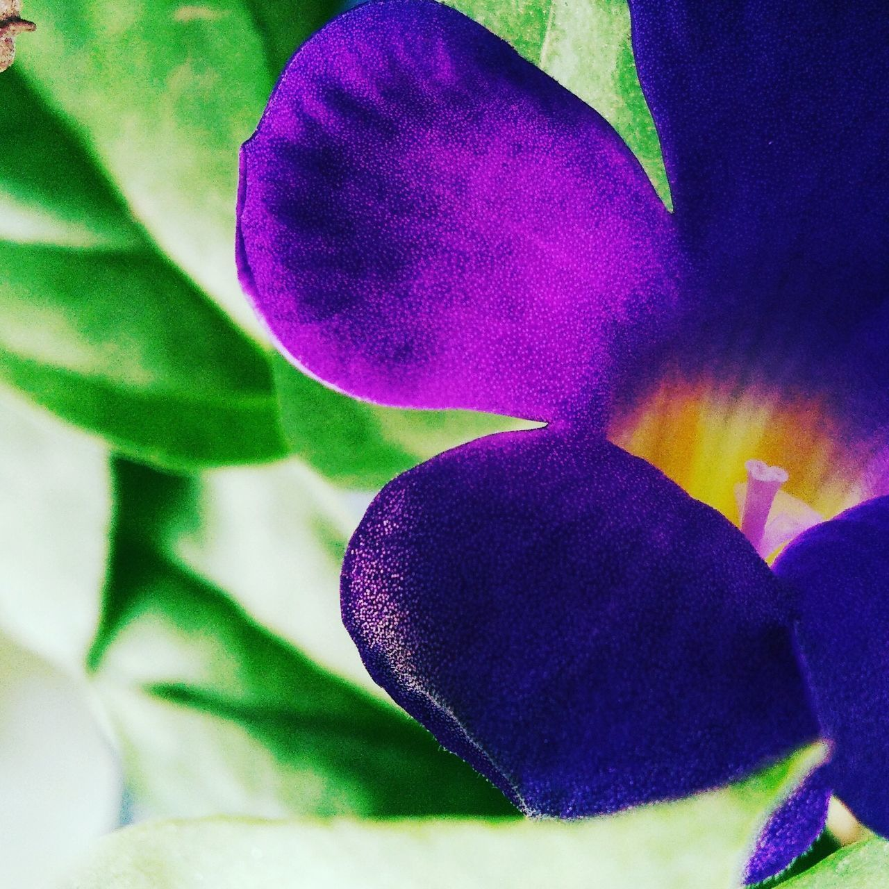 purple, flower, growth, close-up, no people, petal, beauty in nature, plant, leaf, nature, day, flower head, indoors, freshness