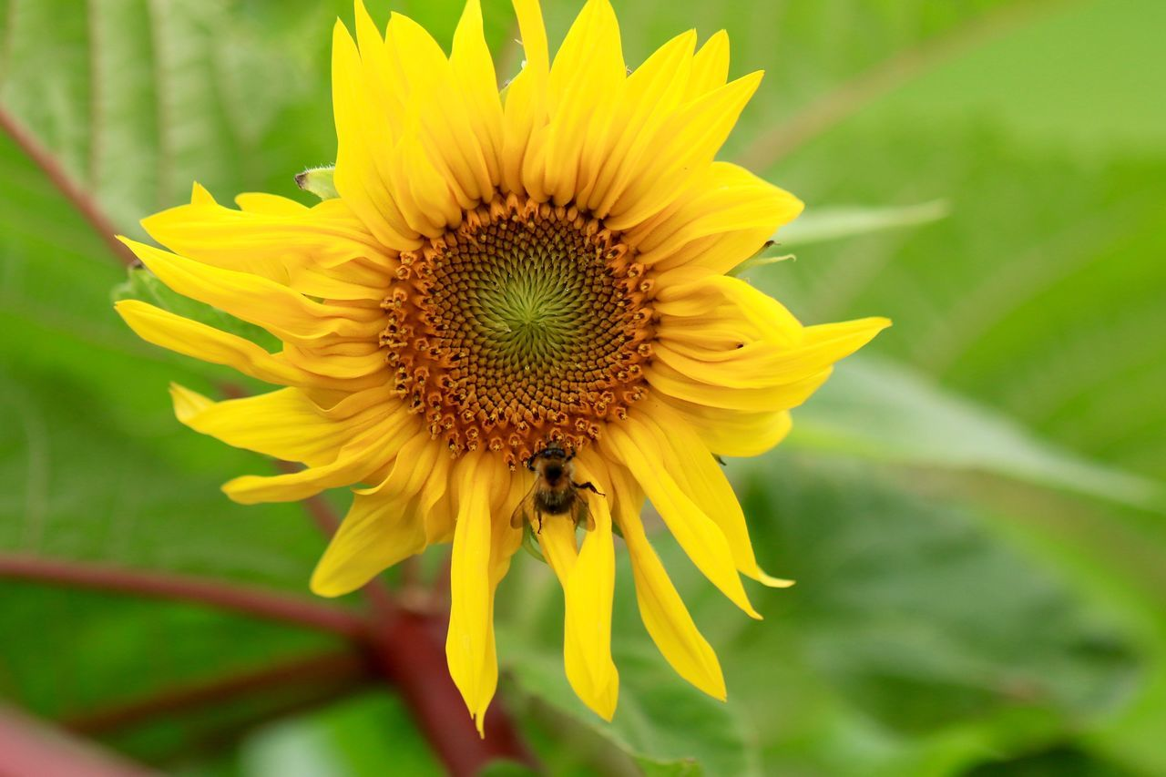 Beauty In Nature Blooming Close-up Flower Flower Head Flowers Fragility Freshness Gelb Growth In Bloom Nature No People Outdoors Petal Plant Pollen Sonnenblume Sonnenblumen Summer Sunflower Sunflowers Yellow Yellow Flower Yellow Flowers